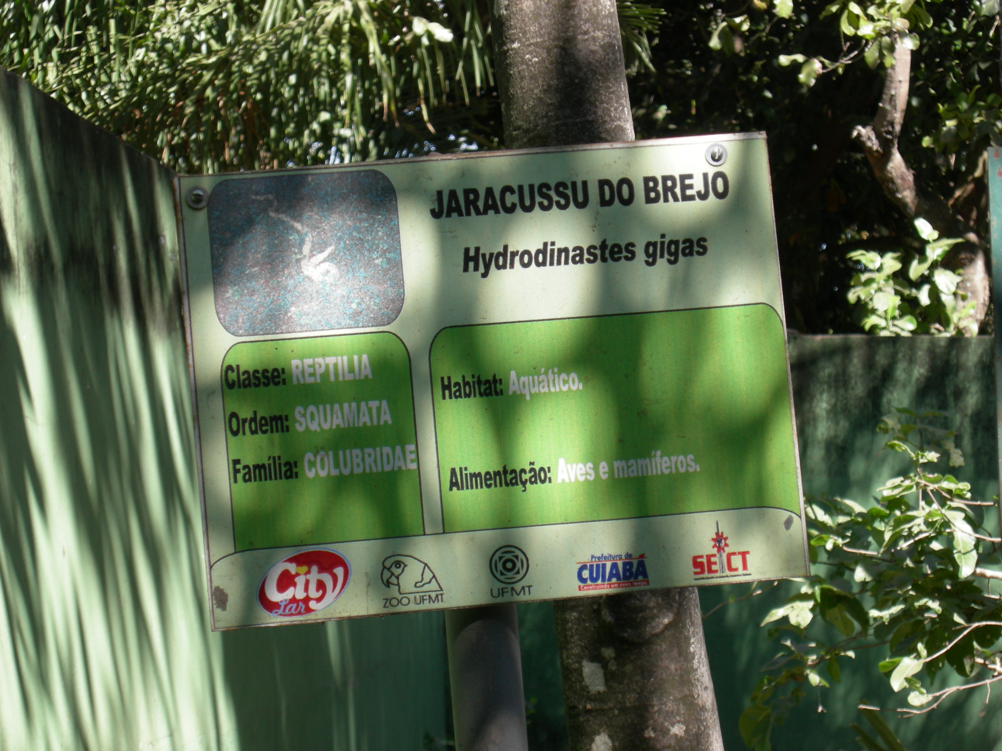 Jaracussu do Brejo (Hydrodinastes gigas) sign