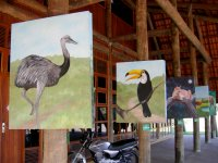 paintings of Brazilian animals at the nature center (3)