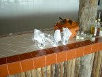 Conch shell napkin holders.