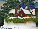 Bellagio conservatory: a winter scene made with flowers and pine boughs