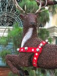 Bellagio conservatory: the reindeer is made of nuts
