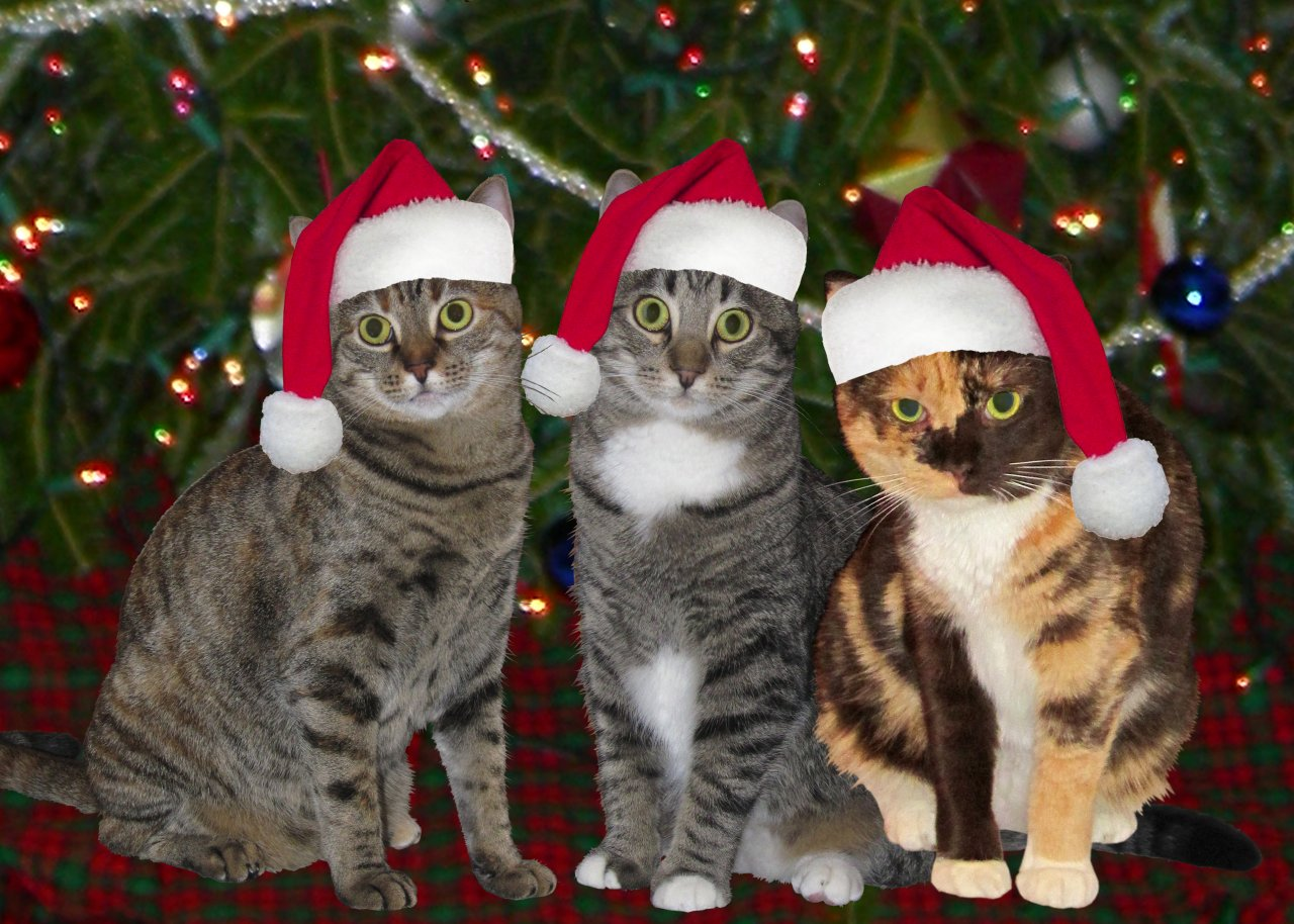 Kitty Christmas 2010: Saru, Haku, and Kamedo in Festive Getups