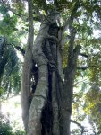 Parasitic Tree