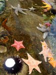 Various Starfish