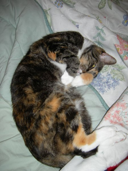 Boo kitty curled up